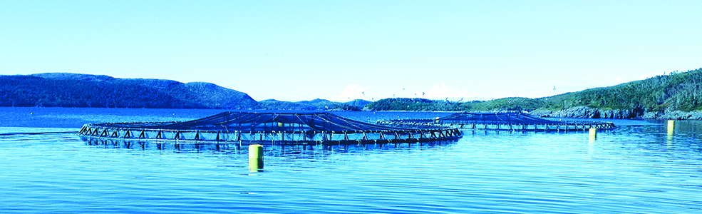 Sustainable Aquaculture Banner